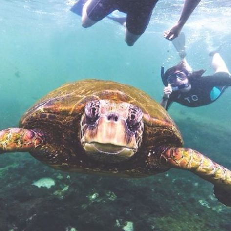 The look on this turtle's face gets me every time. Courtesy of Mermaid Mon and Chief Photographer Dicklegs www.mumwearefine.com