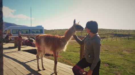 This very friendly guanaco (Patagonia version of a llama) thought it was a dog. It made me feel happier.